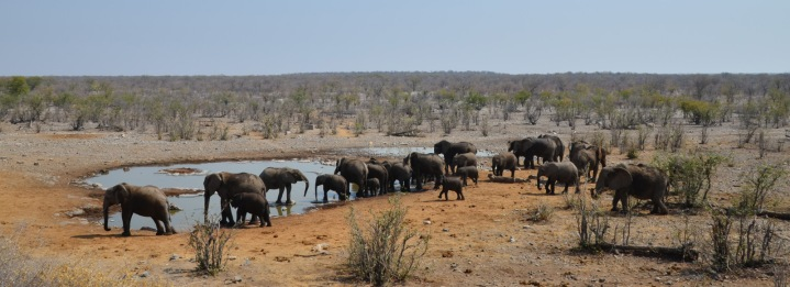 Elephants take over the waterhole