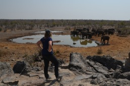 Watching the Elephants
