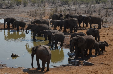 Busy waterhole