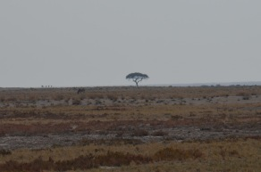Very African Tree