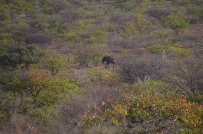Lonely desert Elephant