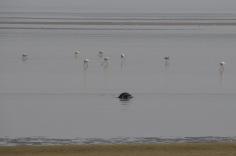 Seal and flamingos