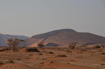 Dune views