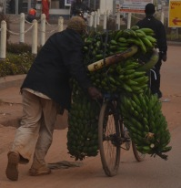 Taking bananas to the market