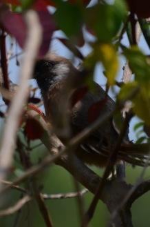Peek-a-bird