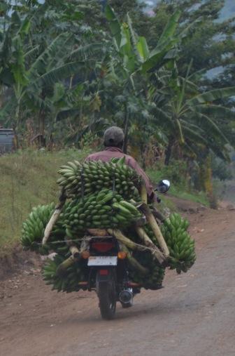 Banana Boda Boda