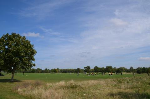 Footy on the fields