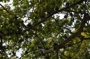 Pigeons overhead