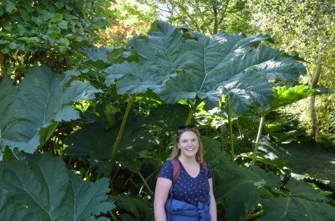 Giant rhubarb or Miniature Gemma?