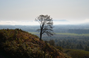 Tree on Conic Hill