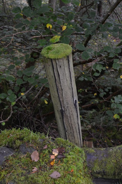 Post with a mossy hat