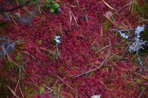 Red moss