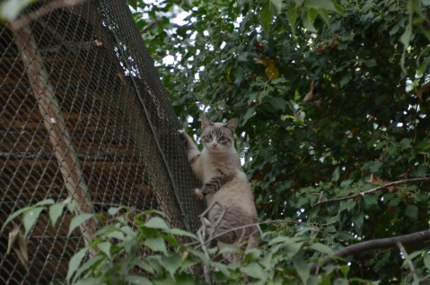 Cat caught by the bird enclosure!