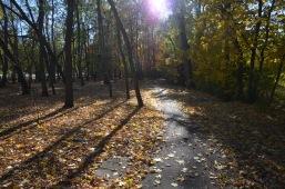 Park woodlands