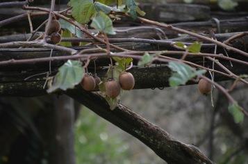Italyfruit