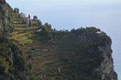 Vineyard on the peninsula