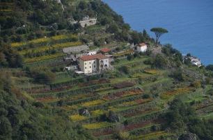 Pretty vineyard colours