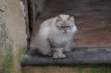 Fluffy resident of Ravello