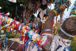 Kitten in heaven (ribbon tree)