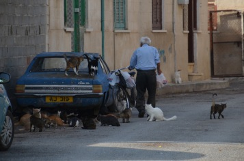 Old Greek Cypriot feeding his cats