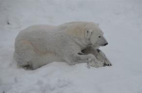 Chilling bear